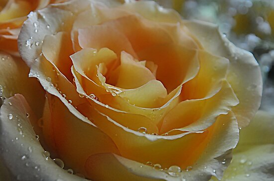 Yellow Rose by Michelle DuBose