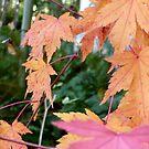 Fall Jungle by Jess Meacham