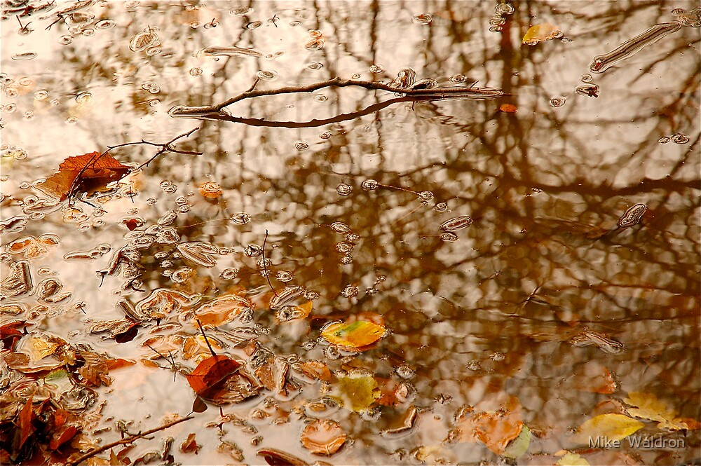 Fallen Leaves and Rain .. by Mike  Waldron