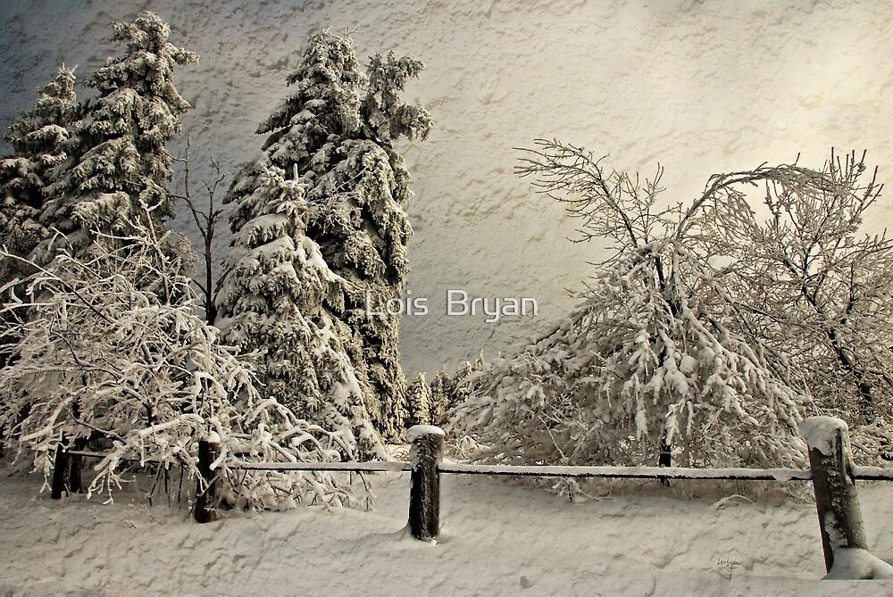 Heavy Laden Blizzard by Lois  Bryan