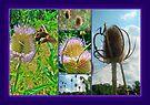 Teasel Thistle - Dipsacus fullonum by MotherNature