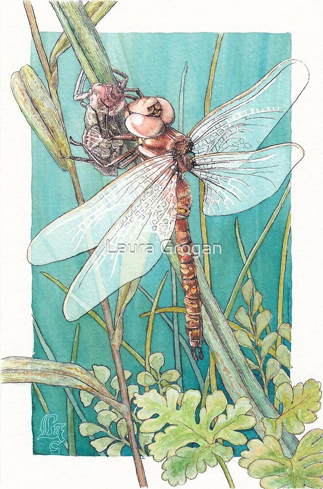 Dragonfly metamorphosis by Laura Grogan