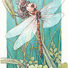 Dragonfly metamorphosis by Laura Grogan
