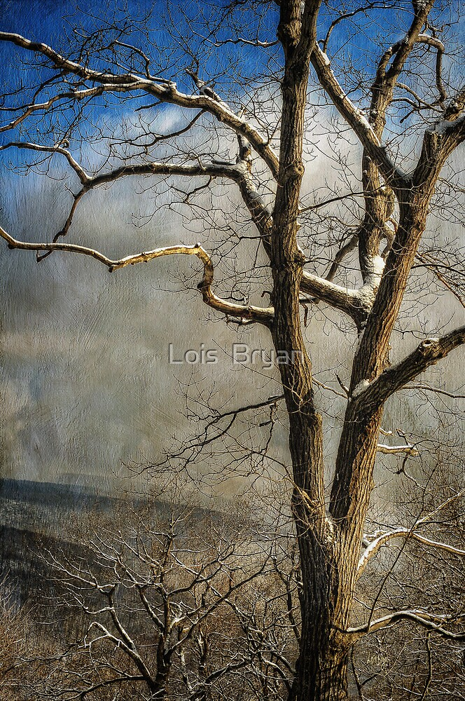 Tree In Winter by Lois  Bryan