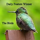 Bird Banner by MaryinMaine