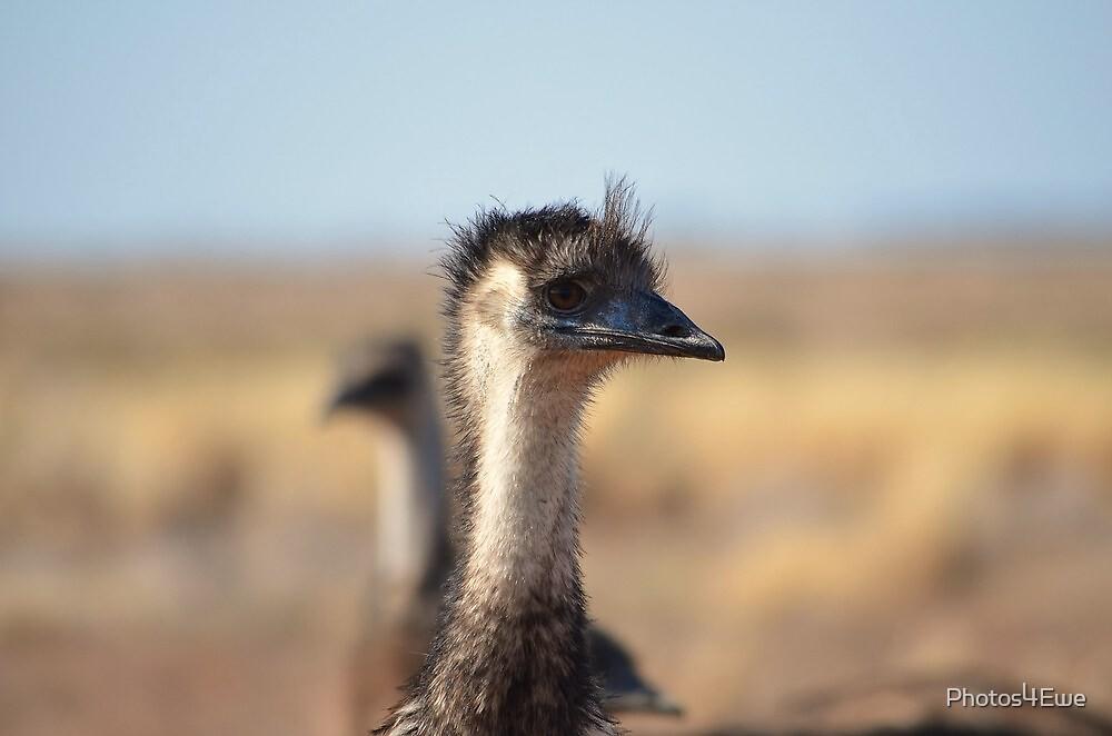 Old man Emu by Mel  LEE