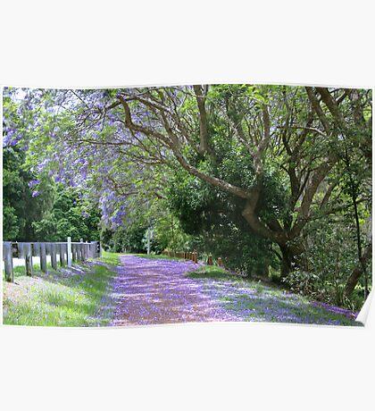 jacaranda walk ..mt.tamborine  Poster