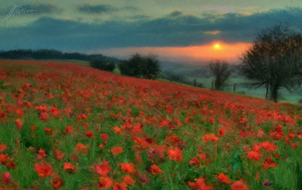 Poppies by Marsea