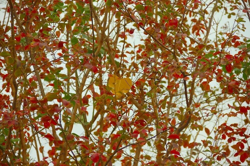 Odd Leaf Out by BlackTopaz