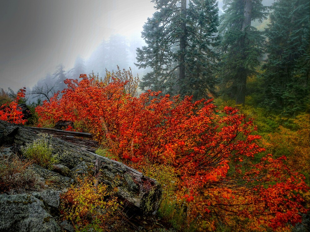 Wham Bam Redenabler by Charles & Patricia   Harkins ~ Picture Oregon