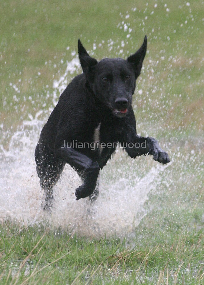 Dog by Juliangreenwood