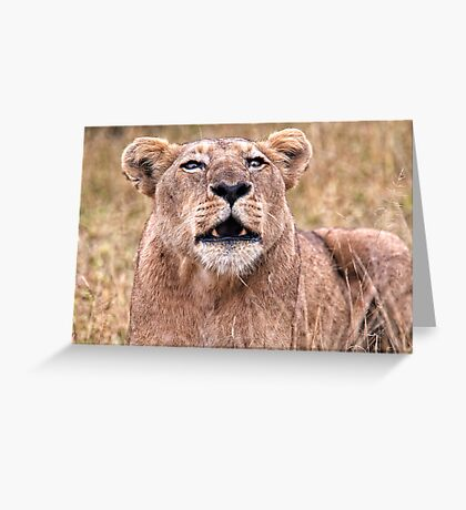Cross Eyed Lioness Greeting Card