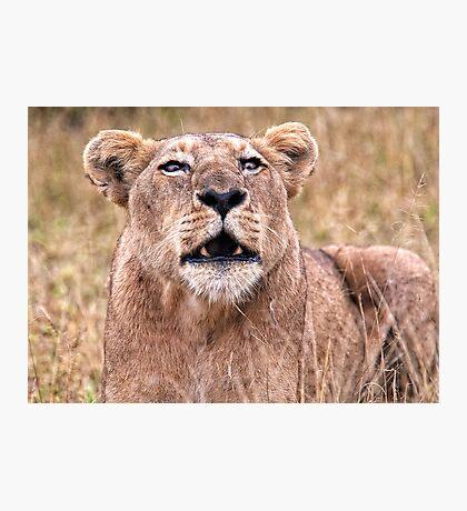 Cross Eyed Lioness Photographic Print