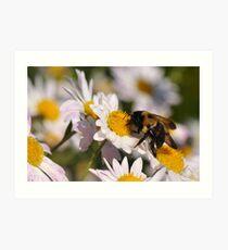 The Last Bumble Bee Art Print