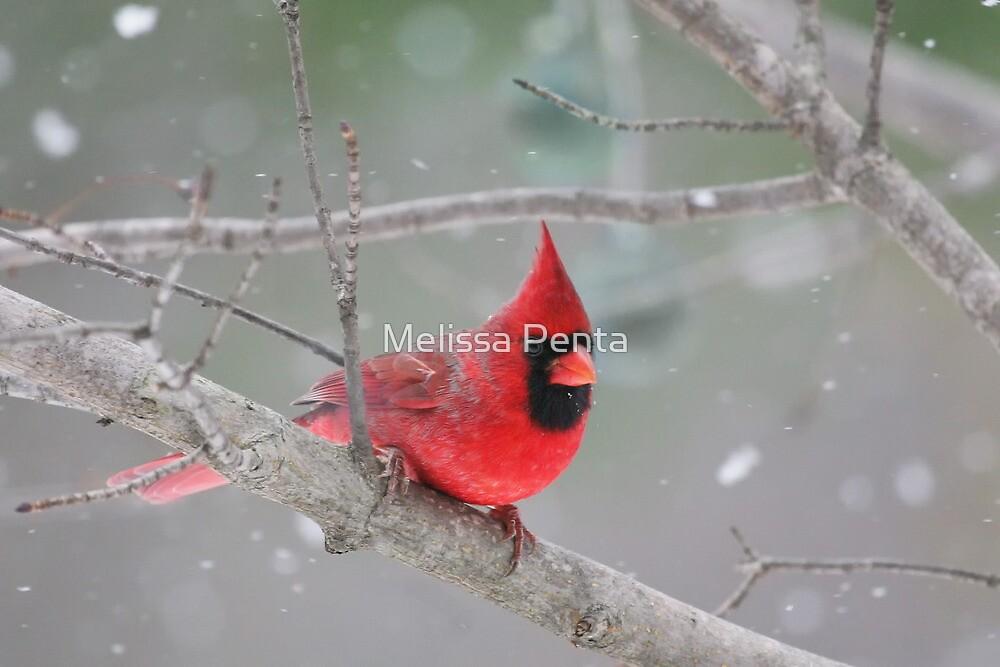 Northern Cardinal by Melissa Penta