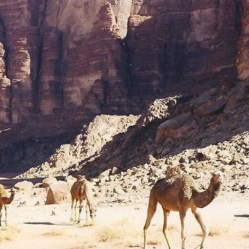 Camels  by vulcanluver