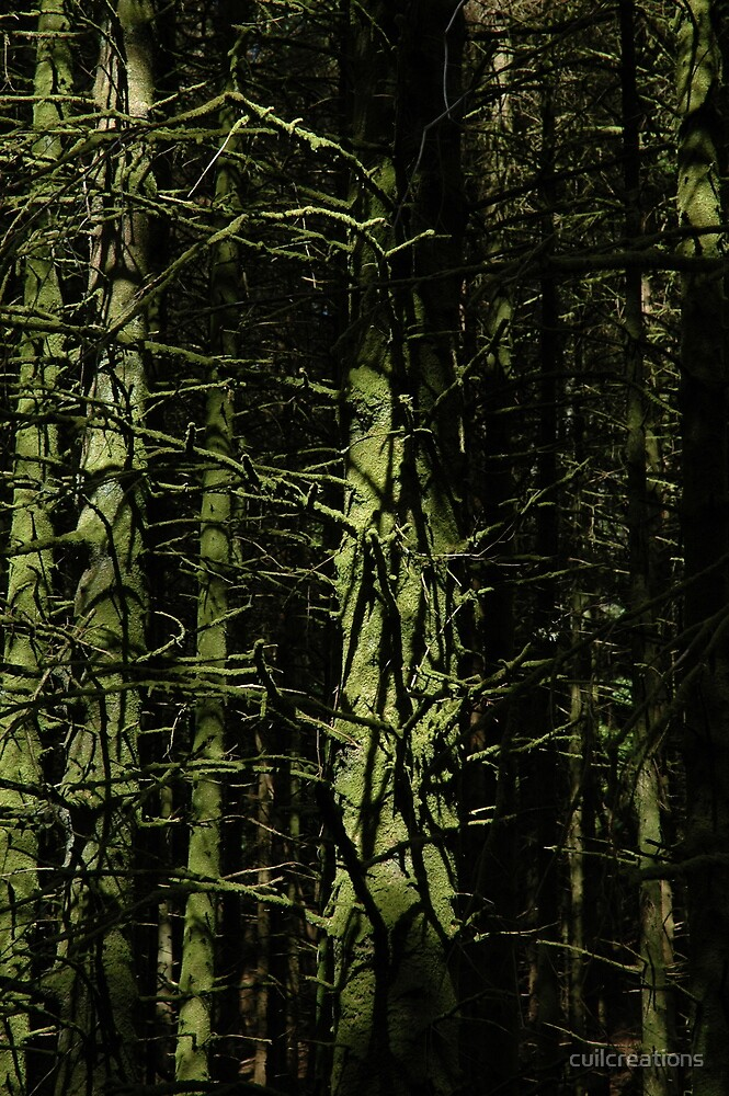 In Ben Lora Forest by cuilcreations