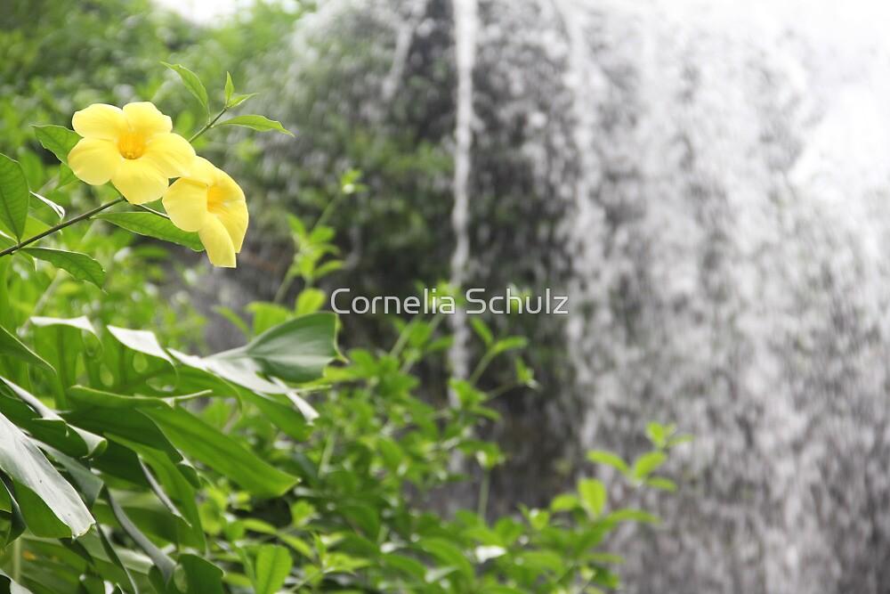 Waterfall by Cornelia Schulz
