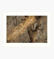 Tree Mating Caught in the Act Art Print