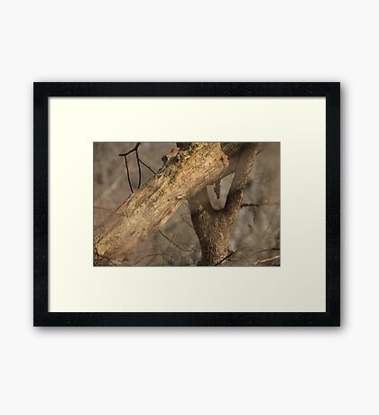 Tree Mating Caught in the Act Framed Print