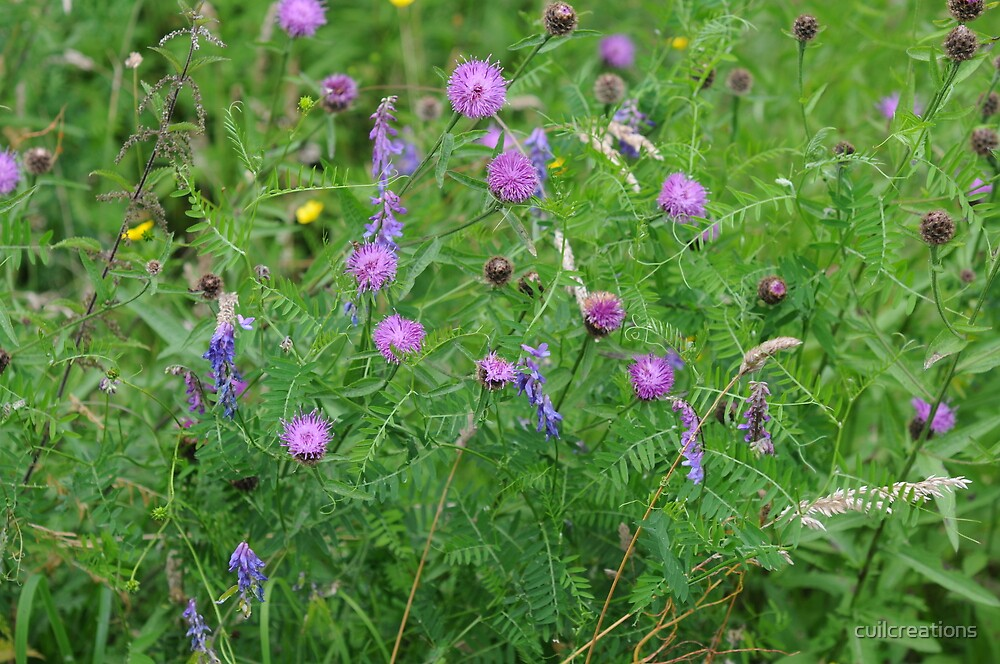 Knapweed and Tufted Vetch by cuilcreations