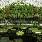 The Waterlily House by cuilcreations