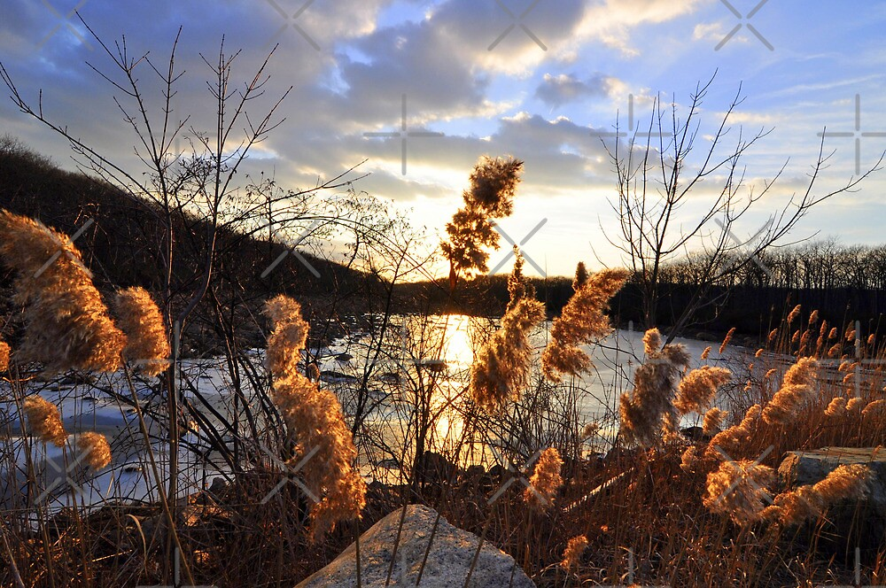 Golden Sunset by hazarip