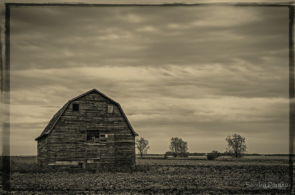Old and Grey by Sandra Parlow