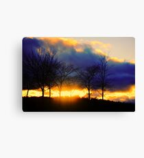 from nature.. Canvas Print