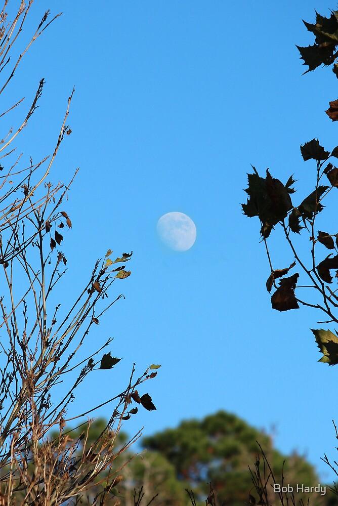 Autumn Moon by Bob Hardy