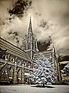 St Mary of the Angels Basilica ~ Geelong Vic by Pene Stevens
