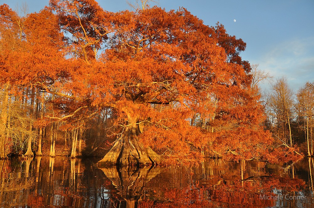 Remarkable tree in remarkable light by Michele Conner