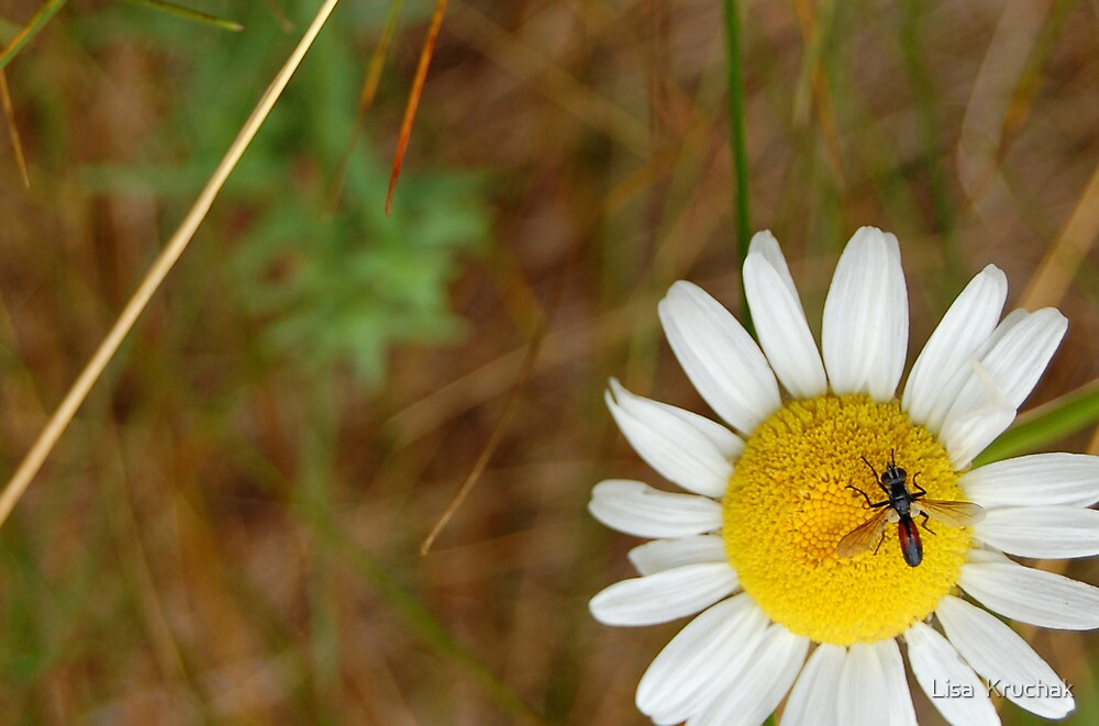 bug & daisy by Lisa  Kruchak