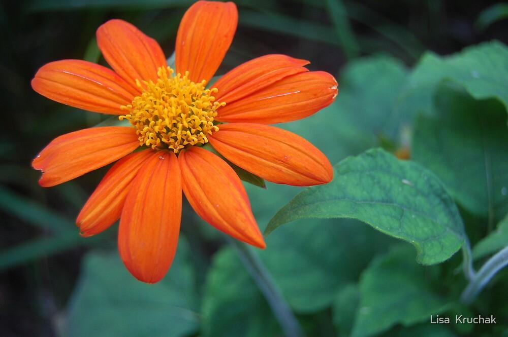 orange flower by Lisa  Kruchak