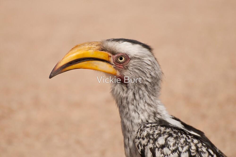 Yellowbilled Hornbill by Vickie Burt