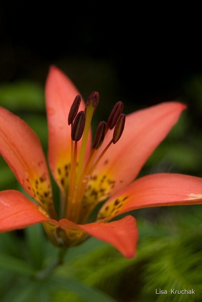 Tiger Lily by Lisa  Kruchak