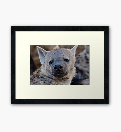 Eyes Of Interest Framed Print