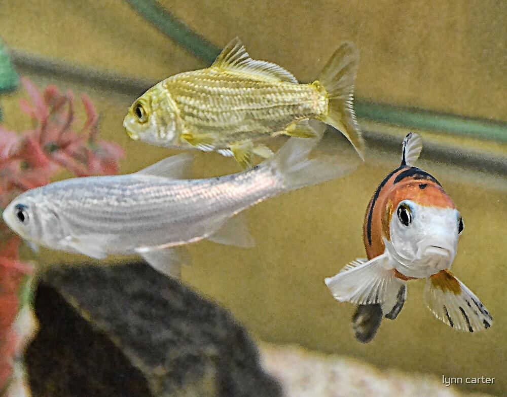 Aquarium Fish At Otter Garden Centre. by lynn carter