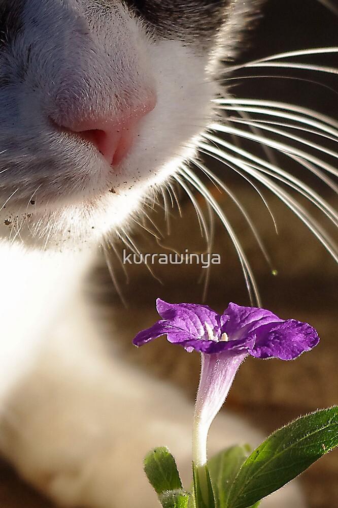 Garden Variety Cat by Penny Kittel