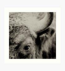Bisons look Art Print