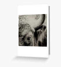 Bisons look Greeting Card