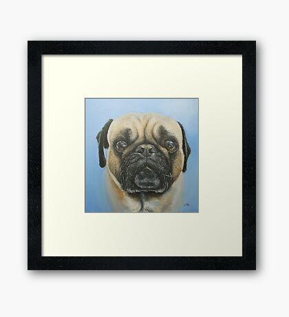 Pug on blue background Framed Print