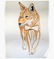 Ethiopian Wolf Poster