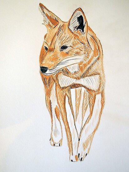 Ethiopian Wolf by CreativeEm