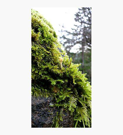 Mossy Rock Photographic Print