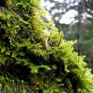Mossy Rock by GlockGirl40
