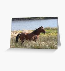 Connemara Pony in the countryside Greeting Card