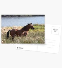 Connemara Pony in the countryside Postcards