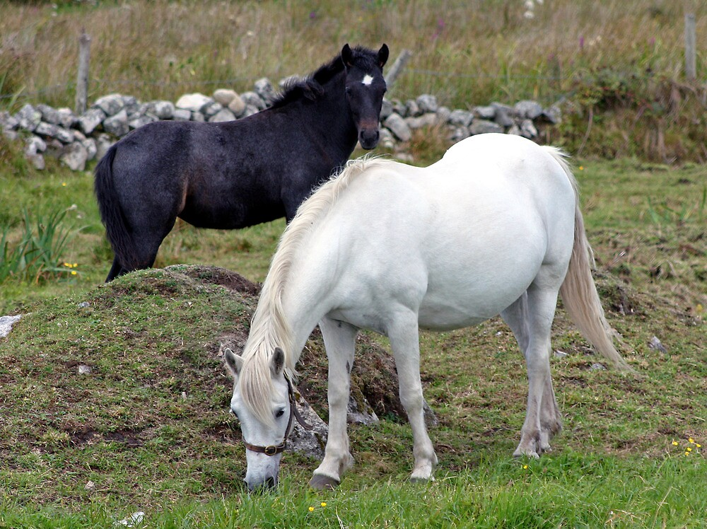 Connemara Pony Mare and Foal by ConnemaraPony