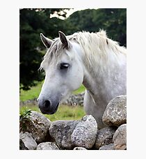 Connemara Pony looking over an Irish stone wall Photographic Print